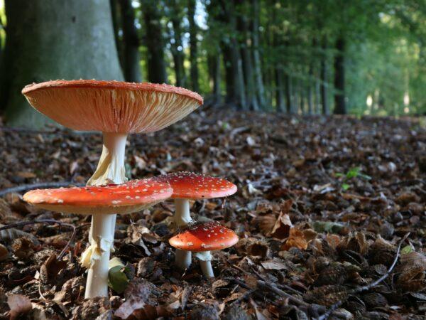 Fantastic Fungi, Mushrooms, Documentary